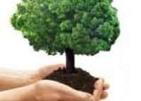 Дерево любви, счастья и здоровья