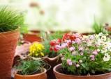Полезные цветы по фен-шуй